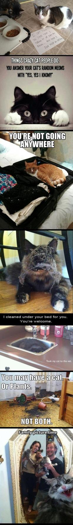 Cat eating in the bowl...: Cat People, Crazy Cats, Kitty Cats, Funny Cats, Cat Owners, Car Crash, Cat Lady
