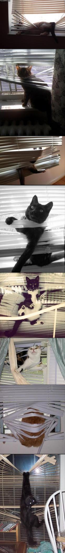 Cats & blinds don't mix: Animals, Buy Blinds, Blinds Don T, Funny Cats, Cats Blinds, Kitty, Funny Pussycat