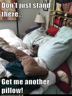 Cats...: Cats, Animals, Funny Cat, Bed, Funny Stuff, Funnies, Funny Animal, Kitty