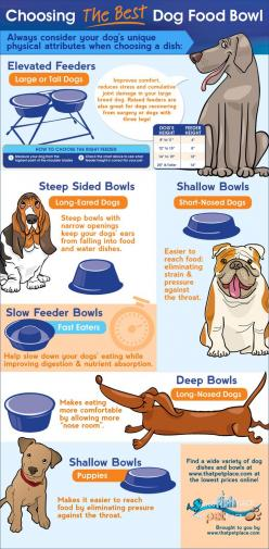 Choosing The Best Dog Food Bowl   #Infographic #Dog #FoodBowl: Dogs, Dog Bowls, Pet, Bowl Infographic, Dog Food Bowls, Animal