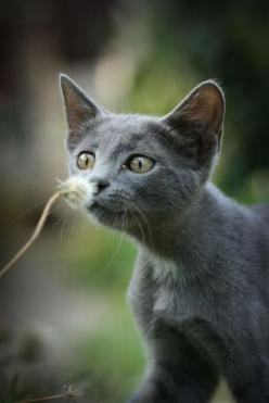 curiosity won't be killing this cat, unless the cat is allergic...poor kitty: Smell, Kitty Cats, Animals, Pets, Kittens, Flower, Grey Cats