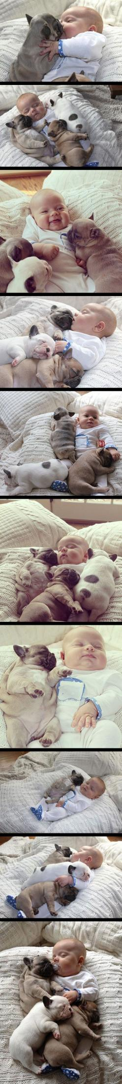 cute babies and french bulldog puppies.: Cuteness Overload, French Bulldogs, My Heart, Puppy, Baby, Animal