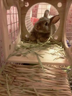 Cute Bunny Rabbit: Animals, Bunnyrabbits 3, Lapin, Bunny S Rabbit, Abøut Mah Bunny, Bunnies Rabbits, Good Good