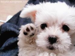 Cute: Puppies, Dogs, So Cute, Pets, Puppys, Adorable, Box, Baby Animals