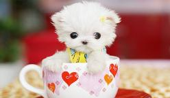 cute puppy, funny puppies: Animals, Dogs, So Cute, Pet, Puppys, Puppy, Teacup