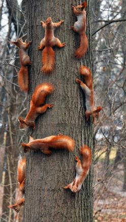 Cute squirrels #squirrels #cute #adorable: Animals, Nature, Family, Creatures, Funny, Red Squirrels, Trees, Photo
