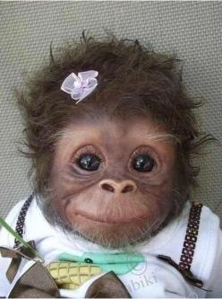 Cutest. thing. EVER!: Babies, Animals, Sweet, So Cute, Pet, Funny, Adorable, Baby Monkeys