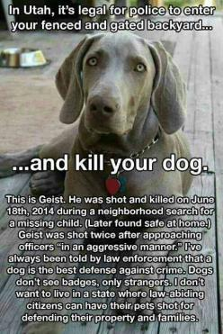 DEMAND JUSTICE FOR GEIST!  Please Sign and Share WIDELY!  http://www.care2.com/news/member/609984414/3783604: Animals, Animal Rights, Dogs, Police, Animal Cruelty, Pet, Animal Abuse, Now