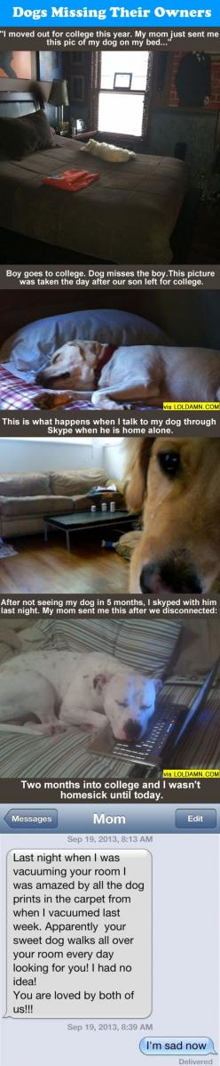 Do You Know Your Dog Misses You When You're Gone. - Almost started to cry reading this at school, so sweet.: Adorable Dogs, Funny Things Dogs Do, Funny Puppys, Dogs Doing Funny Things, Adorable Puppies, Dogs Missing, Puppys Funny, Furry Friends