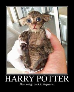 Dobby?! - funny pictures - funny photos - funny images - funny pics - funny quotes - funny animals @ humor: Cats, Dobby, Animals, Harrypotter, Funny, Harry Potter, Funnie