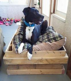 Dog bed (large dog): Bed Large, Large Dogs, Pet Things, Dog Beds, Products, Dog Stuff
