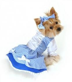 "Dorothy ""Wizard of Oz"" Dog Costume in Blue Gingham: Dogcostumes, Dogs, Halloween Costumes, Dorothy Dog, Pets, Dog Costumes, Pet Costumes, Animal"