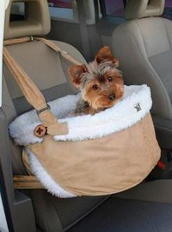 Ensure your pet's safety and comfort while traveling in the car with the Atlantic Heights Booster Seat that allows your best friend to look out the window and keeps the interior of your car protected.: Pet Products, Booster Seats, Dogs, Yorkie, Cars,