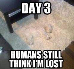 EPIC STEALTH: Animals, Lost, Dogs, Funny Stuff, Humor, Funnies, Funny Animal, Things