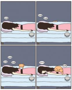 even without the sobs that's Buster and Blaze every night!: Cats, Animals, Stuff, Pet, So True, Crazy Cat, Things, Kitty, Cat Lady