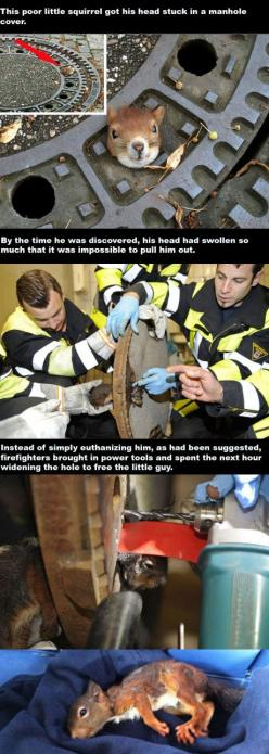 Firefighters being awesome: Firefighter, Animals, Hero, Sweet, Guy, Faith In Humanity Restored, People