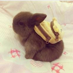 First day of school for cute bunnies. Good luck little rabbit! You shall be the smartest of ALL.: Rabbit, Backpacks, Animals, School, Bunny, Adorable, Things, Baby, Bunnies