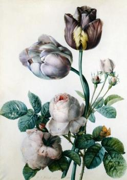 flower illustration - I love how this has a painted look and feel. Love the energy and mood: Botanical Illustration, Color, Tulip, Cabbage Roses, Joseph Stone Feared, Flower, Floral