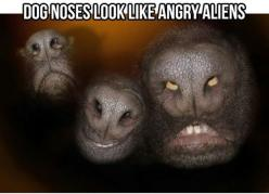 Funny: Animals, Dogs, Angry Aliens, Dognoses, Funny Stuff, Humor, Funnies, Dog Noses
