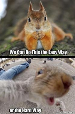 Funny Animals | Funny Blog - Collection of funny pictures, images and videos. Have fun!: Funny Animals, Funny Squirrel, Animal Funnies, Squirrels, Funny Pictures, Funny Blog, Have Fun, Funny Stuff, Animal Memes