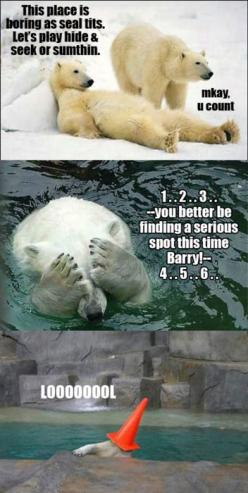 Funny bear: Animals, Polar Bears, Funny Pictures, Polarbear, Funny Stuff, Humor, Funnies, Funnystuff