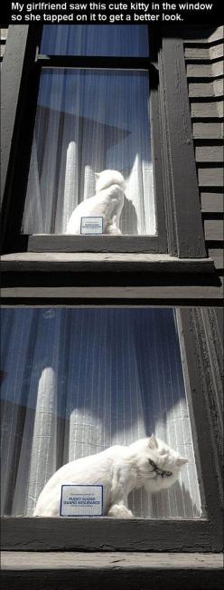 funny cat pictures: Cats, Giggle, Window, Funny Cat, Funnies, Grumpy Cat, Kitty, Animal