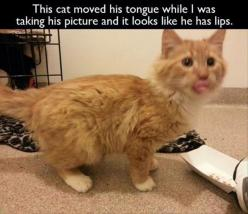 funny cat pictures ~ Instant lips ~: Cats, Funny Animals, Cat Lips, Funny Picture, Funny Stuff, Funnies, Humor, Kitty