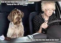 funny dog pictures with captions - Bing Images