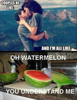 Funny Images, Funny Videos, Funny Quotes, Funny Pick Up Lines, and so much more...! Some Extremely Funny Stuff.: Funny Things, Funny Parrot, Funny Pictures, Funny Stuff, Funny Quotes, Humor, Funnies, Watermelon