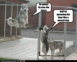 funny pets with captions | Dog pictures with funny captions, Funny pictures with captions: Funny Animals, Funny Dogs, Siberian Husky, Pet, Funny Stuff, Siberian Huskies, Humor, Funnies, Moon Moon