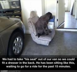 Funny Pictures – 51 Pics: Giggle, Animals, Dogs, Pet, Funny, Funnies, Smile