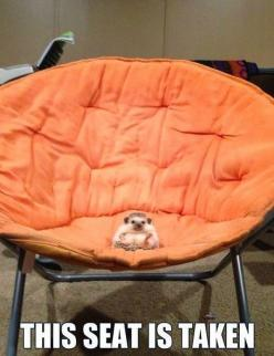 funny pictures  http://stores.ebay.es/VIP-EROTICSTORE?_rdc=1: Chair, Animals, Funny Stuff, Hedgie, Funnies, Things, Funny Animal, Hedgehogs