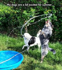 Funny Pictures Of The Day - 103 Pics: Funny Animals, Funny Things, Funny Dogs, Funny Pictures, Funny Stuff, Summer, Dog Funnies, Dogs Funny