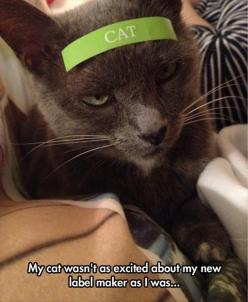 Funny Pictures Of The Day – 115 Pics: Cats, Cat Face, Animals, Label Makers, Funny Pictures, Crazy Cat, Cat Lady