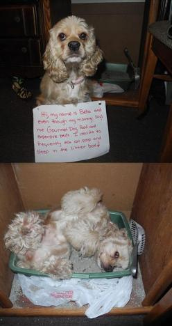 Funny Pictures Of The Day – 55 Pics: Funny Animals, Cat, Funny Dogs, Dog Shaming, Funny Pictures, Litter Box, Dump A Day, Funnies, Pet Shaming