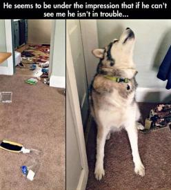 Funny Pictures Of The Day – 72 Pics: Funny Animals, Funny Things, Funny Dogs, Funny Pictures, Cant, Funnypictures, Funnies, Humor