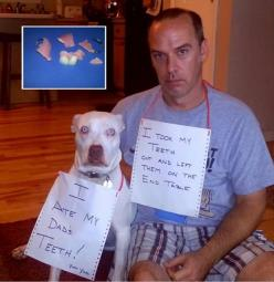 Funny Pictures Of The Day – 74 Pics: Funny Animals, Dog Shaming, Bad Dog, Funny Stuff, Funnies, Dads, Teeth, Pet Shaming