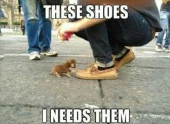 Funny Pictures Of The Day - 76 Pics: Animals, Dogs, So Cute, Puppys, Adorable, Funny Animal, Smallest Dog, Tiny Puppies