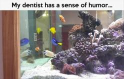Funny Pictures Of The Day – 92 Pics: Giggle, Findingnemo, Dentists, Funny Stuff, Funnies, Humor, Disney, Finding Nemo