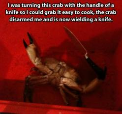 Funny Pictures Of The Day – 95 Pics: Funny Animals, Giggle, Funny Pictures, Crab Disarmed, Funny Stuff, Funnies, Knife, Crabs