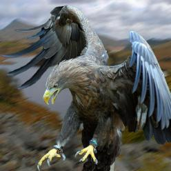 golden eagle: Animals, Nature, Art, Prey, Beautiful Birds, Eagles, Photo