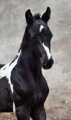 Gorgeous foal with unusual facial marking.  NO link or info.: Beautiful Horses, Face Marking, White Paint, Pinto Horse, Animal
