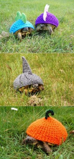Great, now I need a turtle and knitting lessons.: Pet Turtle, Animals, Turtle Cozies, Turtles, Shark, Tortoises