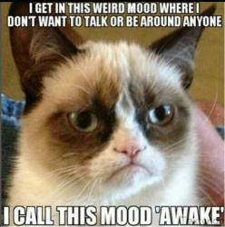 Grumpy cat, grumpy cat pictures, grumpy cat photos ...For more hilarious memes and funny stuff visit www.bestfunnyjokes4u.com/lol-best-funny-cartoon-joke-2/: Cats, Grumpycat, Quote, Funny Stuff, Grumpy Cat, Animal, Funnie