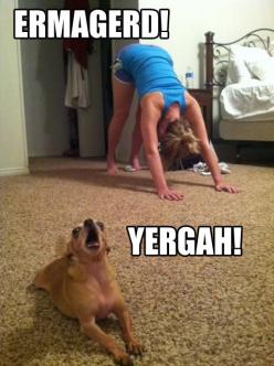 haha what a psycho little dog @Sally Cooper: Giggle, Animals, Dogs, Ermahgerd, Ermagerd Yergah, Funny Stuff, Funnies, Yoga
