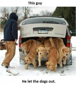hahaha, Can you imagine the amount of dog hair you'd vaccuum up everyday if you had 6 Goldens?: Animals, Dogs, Golden Retrievers, Pet, Funny, Puppy, Dr. Who, Friend