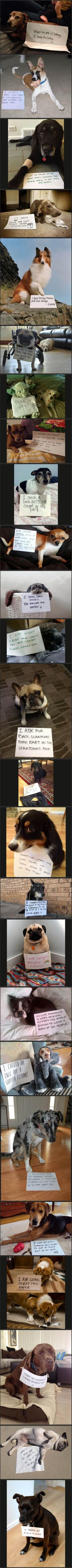 hahaha these are my favorite thing ever.: Funny Animals, Dog Shame, Dog Shaming, Animal Shame, Bad Dog, Funny Dogs Hilarious, So Funny, Dog Confession