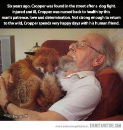Happy fox and his human friend… it probably runs around going RINGDINGDINGDING: This Man, Awwww Reminds, Human Friend, Faith In Humanity Restored, Friend Awwww, Pet Fox, Animal