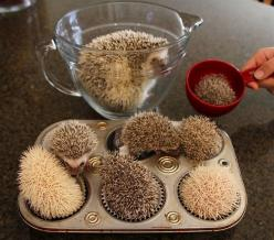 Hedge muffins!: Cupcake Hedgehog, Animals, Stuff, Funny, Hedgie, Hedgehog Muffins, Hedgehogs