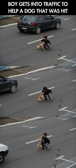 Hero of the day // funny pictures - funny photos - funny images - funny pics - funny quotes - #lol #humor #funnypictures: Hero, Sweet, Faith In Humanity Restored, Dog, Little Boys, Kid, Animal